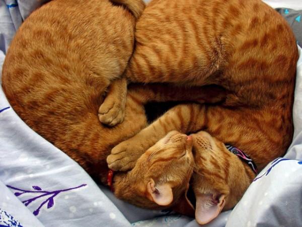 Советы по уходу и воспитанию рыжего кота