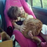 Весенняя уборка. Советы для владельцев домашних животных