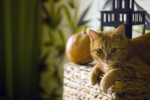 Рыжий кот на корзине