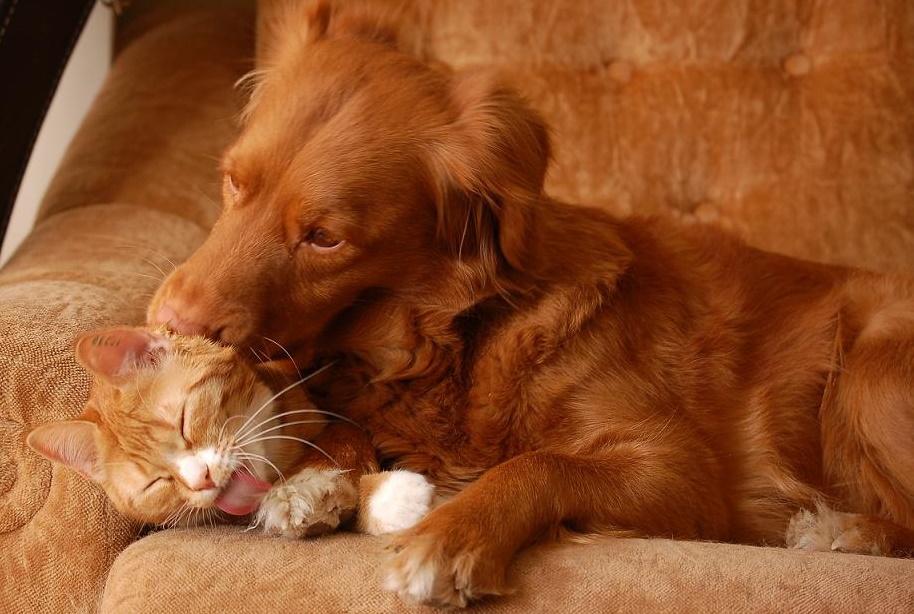 пекин знакомство дружба найти друга в