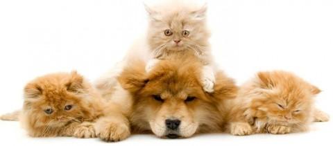 Котята с собакой