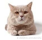 О кошке