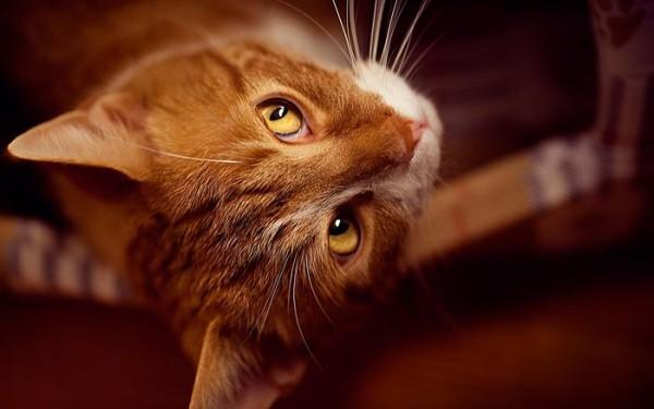 воспитание котов и кошек