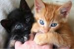 Почему котята кусают руки?
