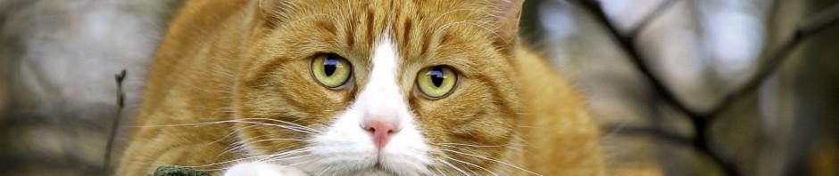 котик ждет