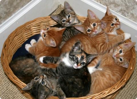 рыжики и серенькие котята
