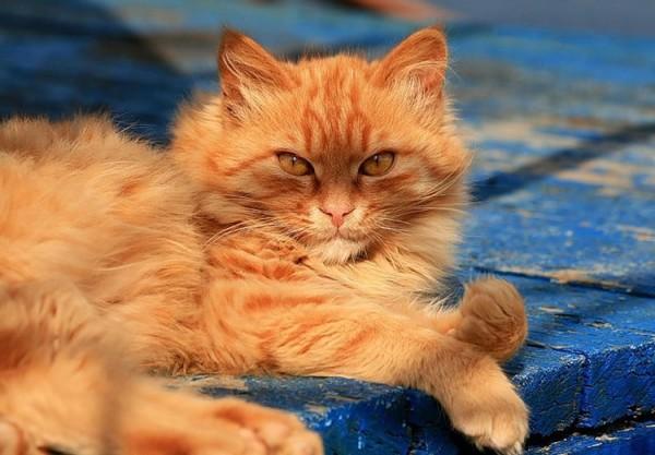 вкусный корм для рыжего кота
