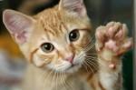 Котов любят семейные люди и холостые