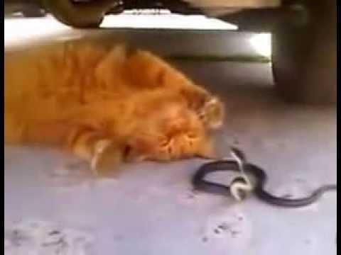 рыжий кот и змея