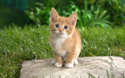 Почему кот маленький