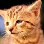 Говорящий рыжий котенок.