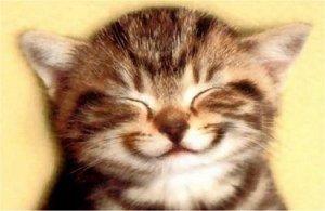 котик улыбается
