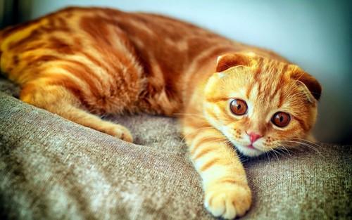 рыжий котенок хочет прославиться