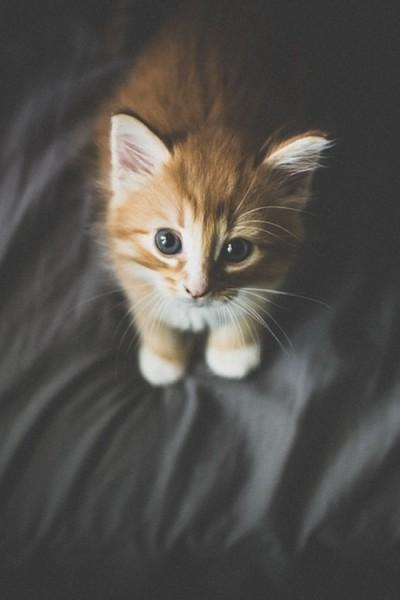 котик хочет на руки