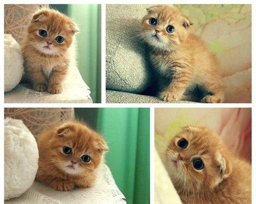 игры с котятами