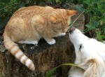 Кошки признают своих хозяев