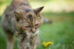 Ушла из жизни самая старая кошка в мире