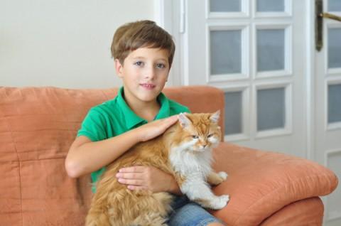 мальчик гладит кота рыжего большого сидя на диване