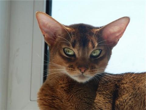 кот у окошка
