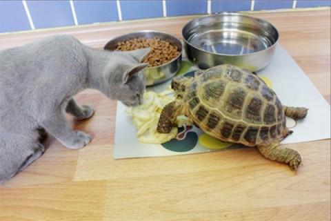 черепаха и кот