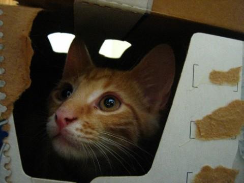 Cat-inside-a-box