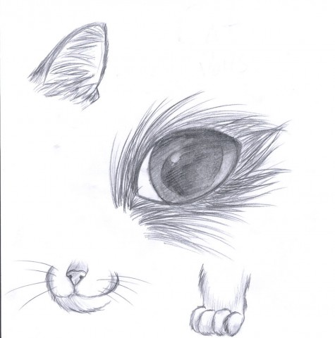 How_to_draw_a_cat_by_1PencilBurner