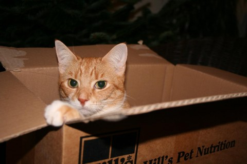 angus-in-a-box