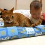 Как снизить риск возникновения аллергии на кошку у новорожденного?
