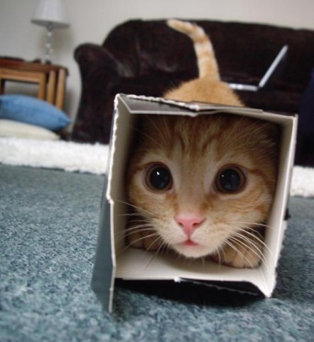 cat_in_a_box