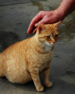 cat_in_heat
