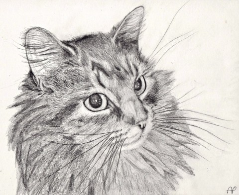 cat_pencil_drawing_by_mintimelon-d5x2gcf