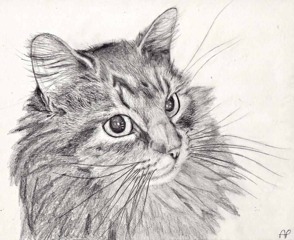 Пушистые коты рисунки