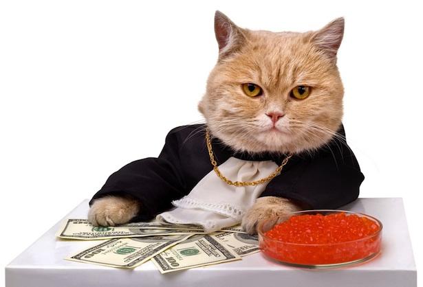 коты и деньги фото