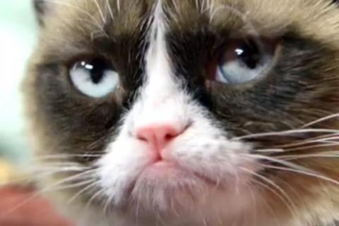grumpy_cat_648x365_2360648079-hero