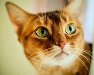 зеленые глазюки