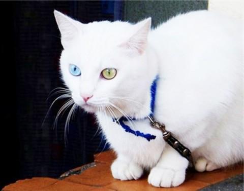 неординарный кот