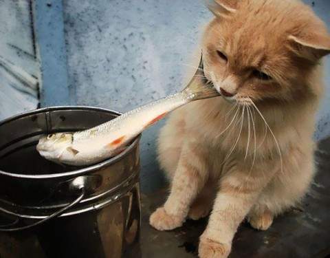 15-cat-thieves-that-were-caught-red-pawed38