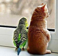 кот и птица рядом