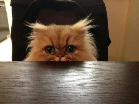 6-29-12-funny-hilarious-caturday-photos-cats20