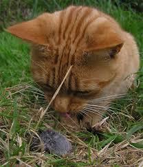 кот поймал птичку