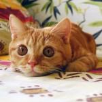 Кошачий язык — или о чем нам хотят рассказать животные