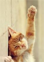 Рыжий кот, который покорил сердца всех