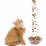 10-ка лучших кошачьих кормов, которые заставят кота мяукать по новому