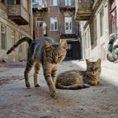 two-street-cats