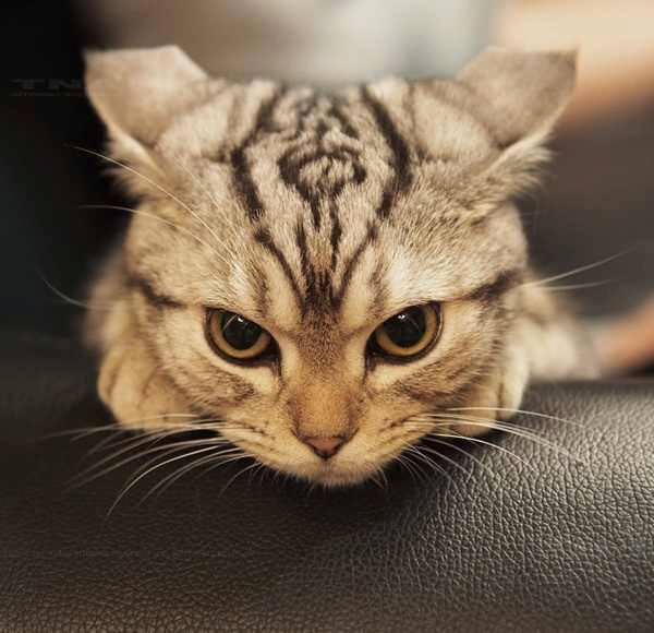 мяу котик говорит
