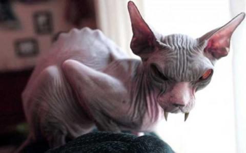 evil-cats-5