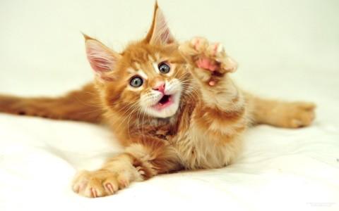 image-wallpaper-1920-1200-Funny-Cat-LOL-cats-N7115804