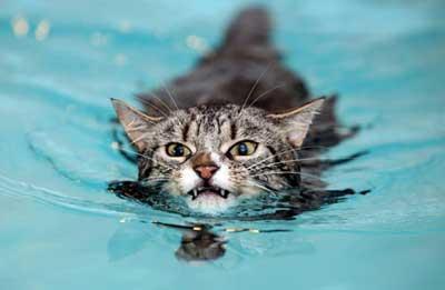 swimming2bcat